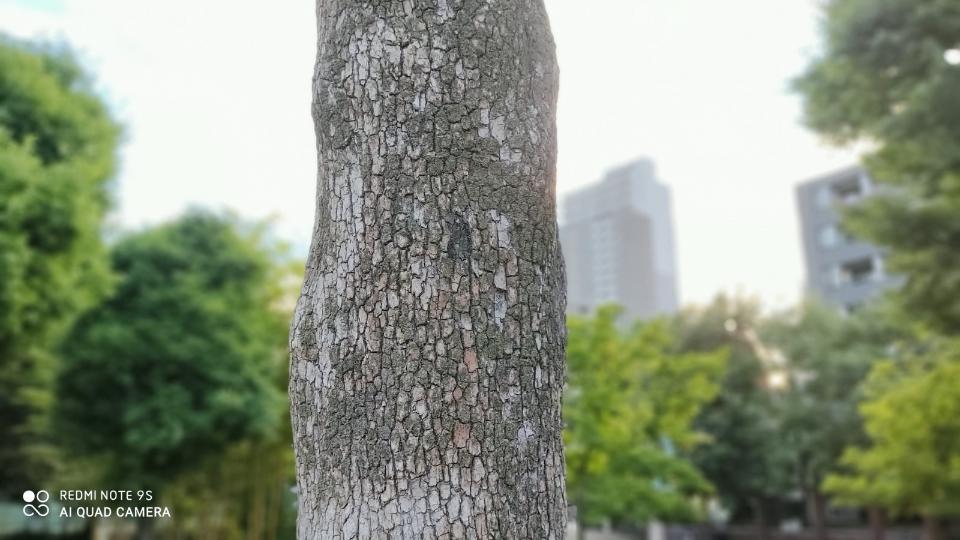 Xiaomi「Redmi Note 9S」の「木のポートレート」