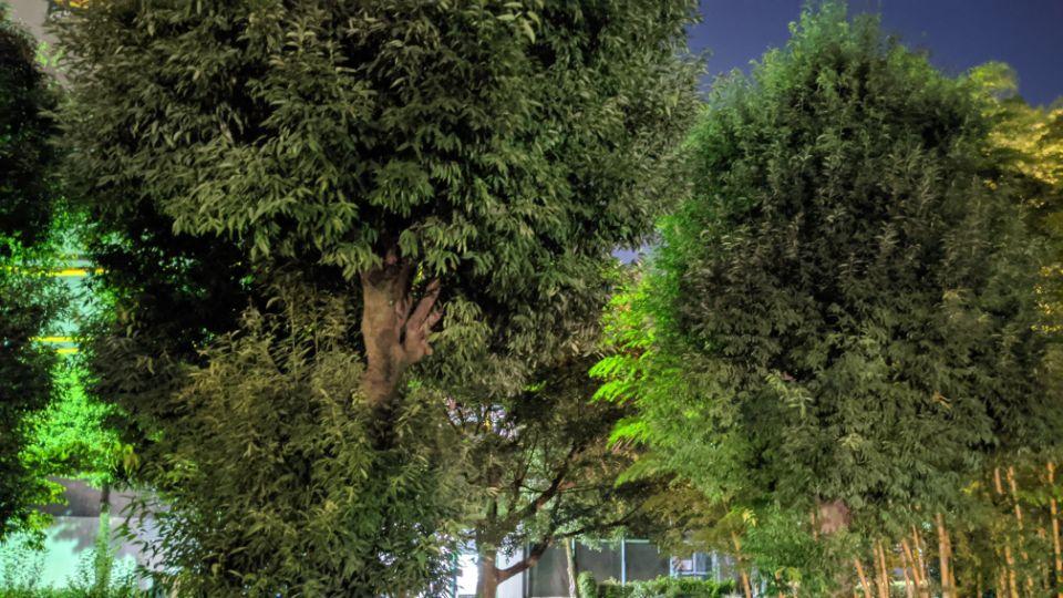 「Google Pixel 4a」の夜景モードの葉っぱ