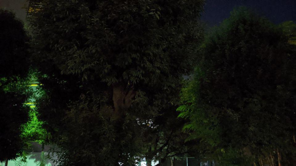 「Google Pixel 4a」の夜景を標準で葉っぱ
